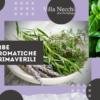 Erbe aromatiche primaverili